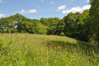 Button Oak Meadow