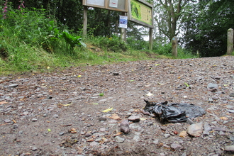 Earls Hill dog poo rubbish
