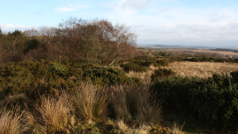 Catherton Common