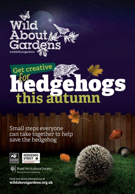 Wild about hedghogs