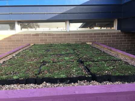 DePave: green roof on shipping container at Sutton Hill