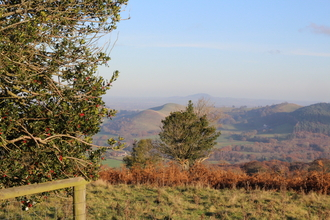 The Hollies nature reserve, Shropshire