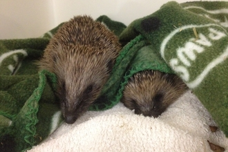 Cuan Wildlife Rescue
