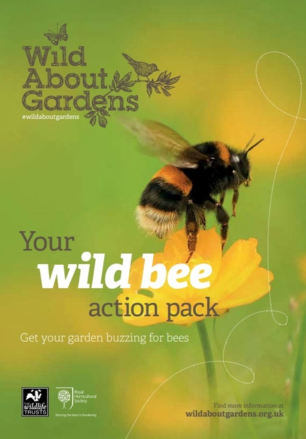 Wild about bees