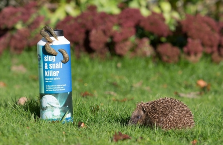 Hedgehog with slug pellets