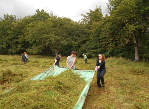 Work party at Monastery Fields wildlife site