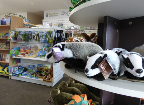 Cuddly badgers in shop