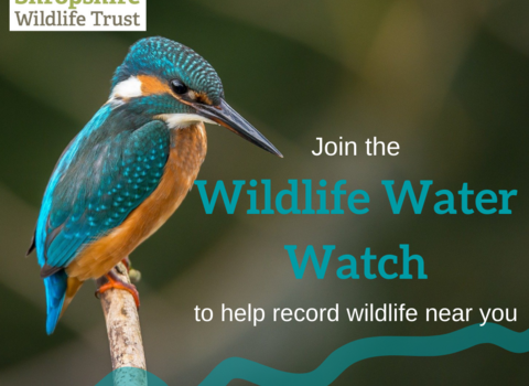 Wildlife Water Watch